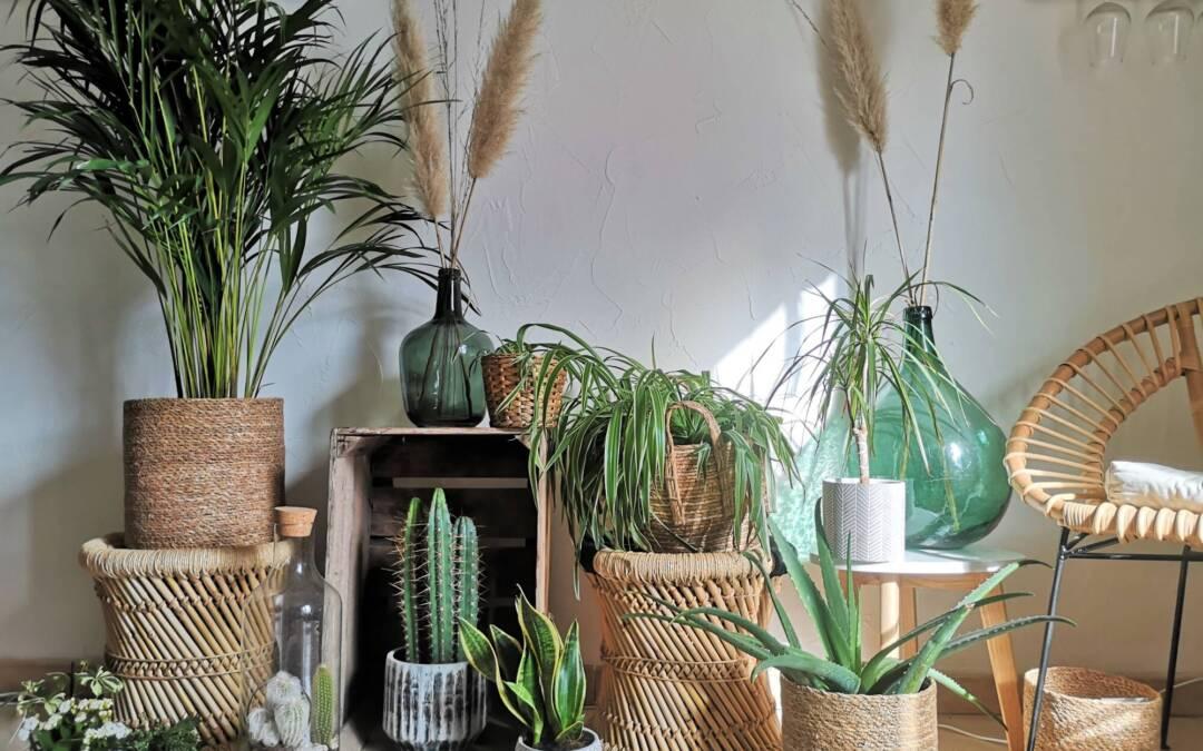Assainir son air: l'étonnant pouvoir des plantes dépolluantes